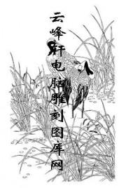 白描仙鹤-矢量图-芦苇仙鹤-19-电子版仙鹤