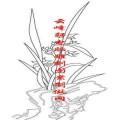 梅兰竹菊-矢量图-兰花-mlxj010-梅兰竹菊刻绘图