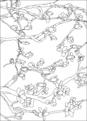 横版48,玉兰花