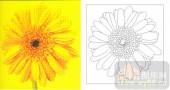 雕刻玻璃-肌理雕刻系列1-向日葵-00111