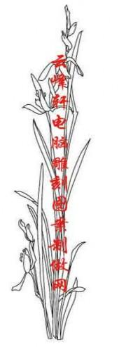 梅兰竹菊-白描图-兰花-mlxj022-梅兰竹菊白描图