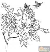 花开富贵-白描图-蝴蝶牡丹-12-牡丹全图