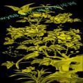 牡丹花鸟-浮雕雕刻图案