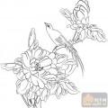 工笔白描牡丹画-姹紫嫣红-mdbm005-中国白描牡丹
