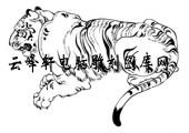 虎1-矢量图-人中龙虎-16-电子版虎