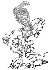 名家画鹰-矢量图-ca画鹰-鹰雕刻图