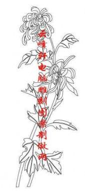 梅兰竹菊-白描图-菊花-mlxj044-梅兰竹菊国画白描