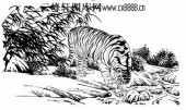 虎第五版-矢量图-溪边觅水-12-虎路径图