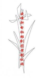 梅兰竹菊-白描图-兰草-mlxj028-梅兰竹菊国画白描
