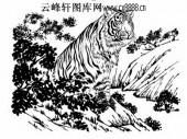 虎第五版-矢量图-鸱目虎吻-25-虎国画矢量