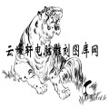 虎1-矢量图-龙吟虎啸-5-虎国画矢量