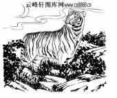 虎第五版-矢量图-骏波虎浪-29-虎矢量图