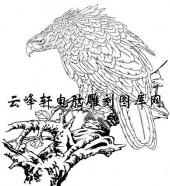 名家画鹰-矢量图-b鹰-矢量鹰
