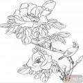 工笔白描牡丹画-国色天香-mdbm001-牡丹图片