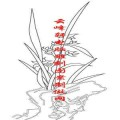 梅兰竹菊-白描图-兰草-mlxj010-梅兰竹菊雕刻图片