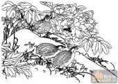 花开富贵-白描图-牡丹花鸟-13-牡丹国画白描